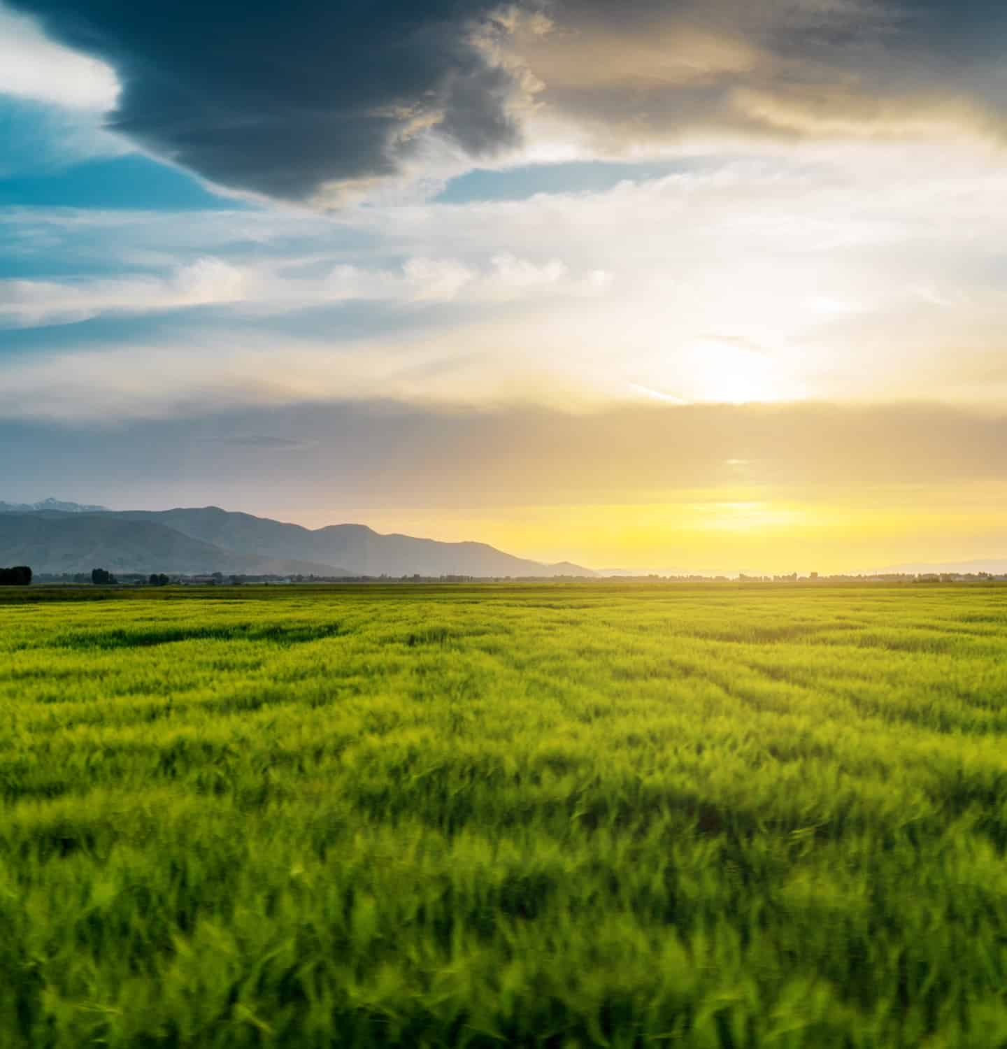 Field of green gras with sunset and blue sky
